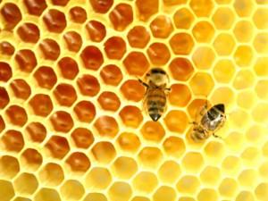 api sul miele