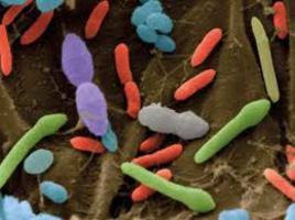 Microbi che cambiano e ci cambiano
