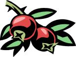Mirtillo Rosso