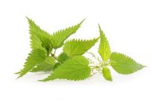 ortica foglie