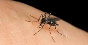 Repellenti per zanzare e zecche: zanzare ed antizanzare
