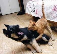 Cani stressati e gatti schizzati