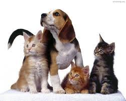 animali e parassiti