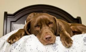 L'artrosi del cane