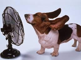 Animali al caldo