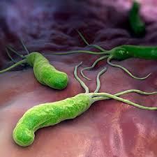 Helicobacter: buono o cattivo?