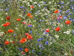 Allergia ai pollini: il rimedio più semplice