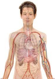 Nuove immagini per il nostro corpo: lo sguardo del bravo diagnosta